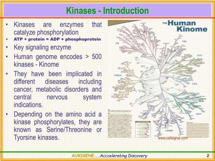Kinases introduction