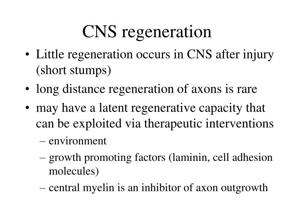 CNS regeneration