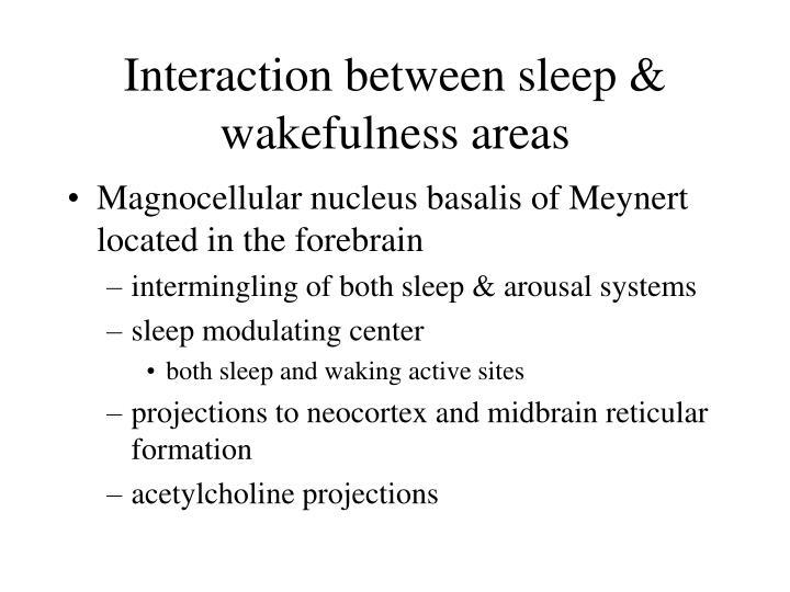 Interaction between sleep wakefulness areas