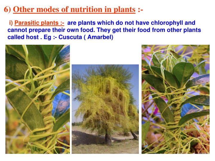 Ppt Chapter 1 Nutrition In Plants Powerpoint Presentation Id