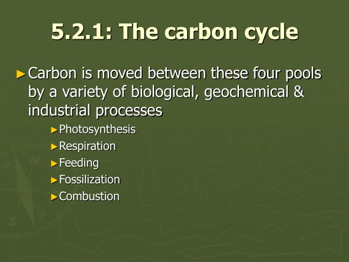 5 2 1 the carbon cycle3