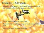 example 1 gm maize