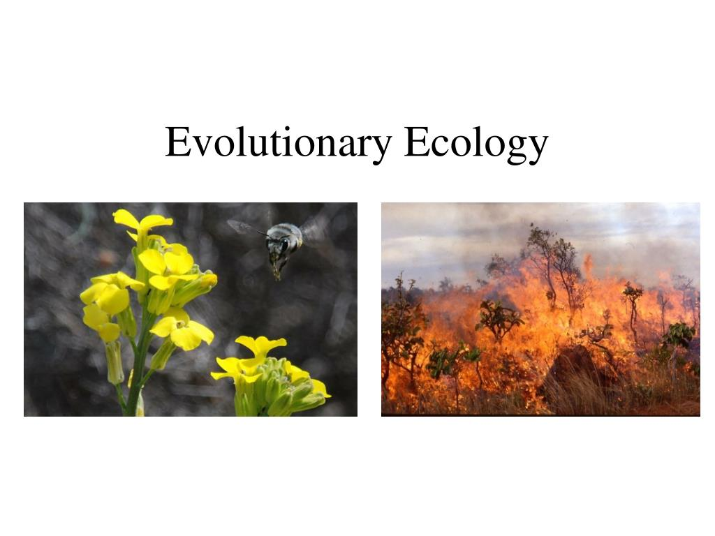 evolutionary ecology l.