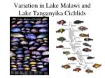variation in lake malawi and lake tanganyika cichlids