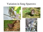variation in song sparrows