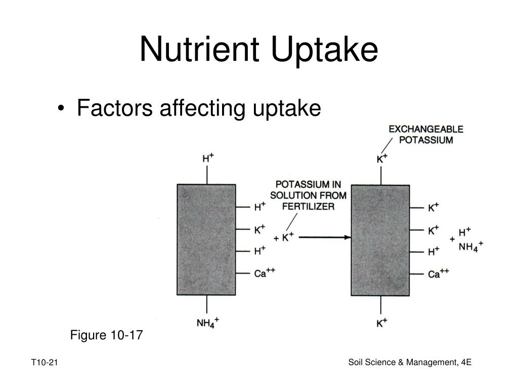 Factors affecting uptake