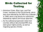 birds collected for testing