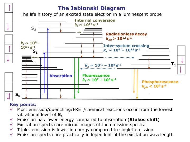 Ppt absorption excitation and emission spectra quantum yield the jablonski diagram ccuart Image collections