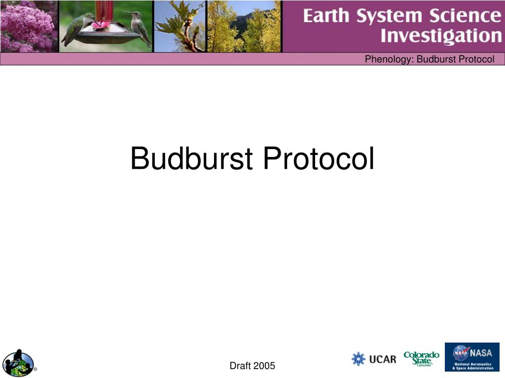 budburst protocol l.