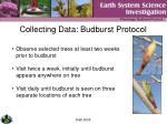 collecting data budburst protocol