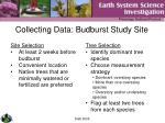 collecting data budburst study site