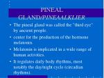 pineal gland pineaalklier