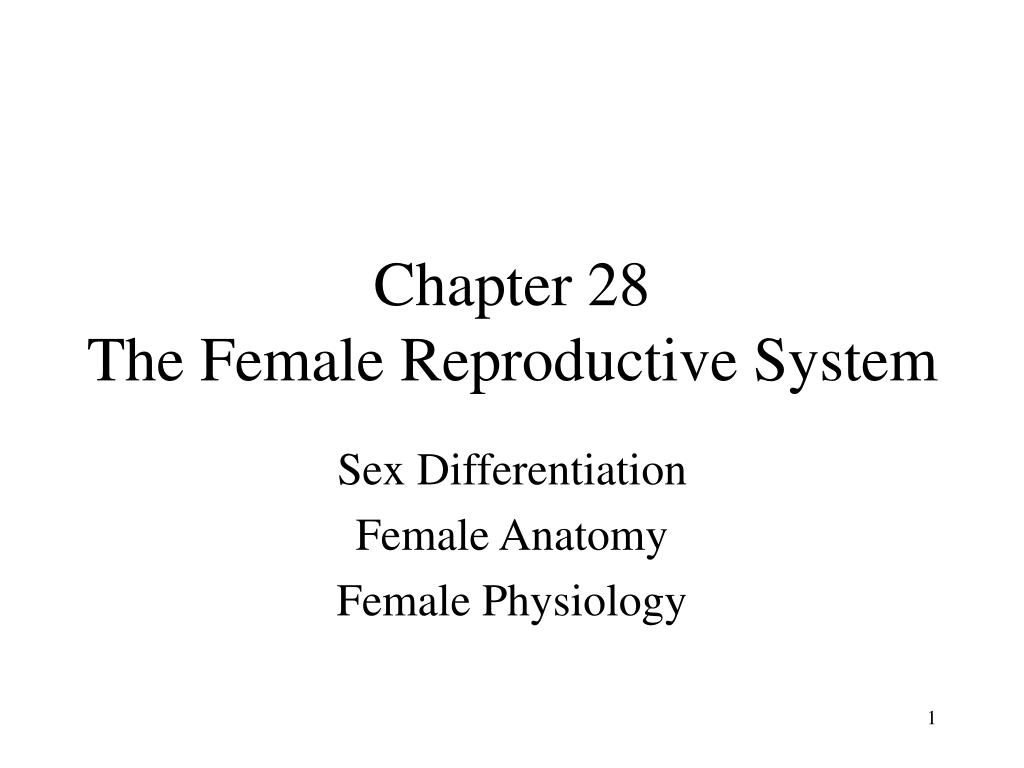 chapter 28 the female reproductive system l.