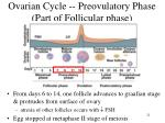 ovarian cycle preovulatory phase part of follicular phase