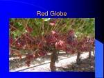 red globe3