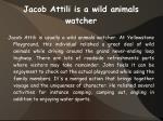 jacob attili is a wild animals watcher