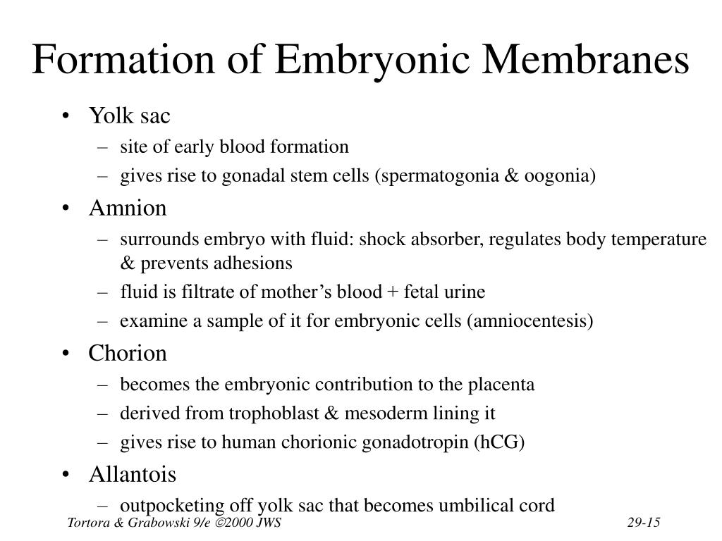 Formation of Embryonic Membranes