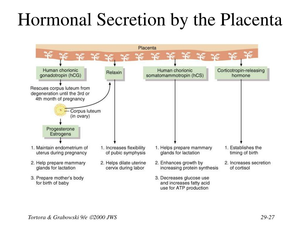 Hormonal Secretion by the Placenta
