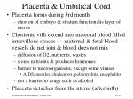 placenta umbilical cord
