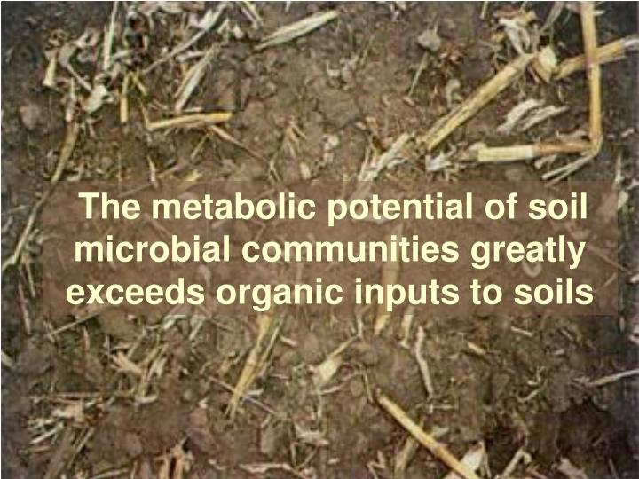 The metabolic potential of soil microbial communities greatly exceeds organic inputs to soils