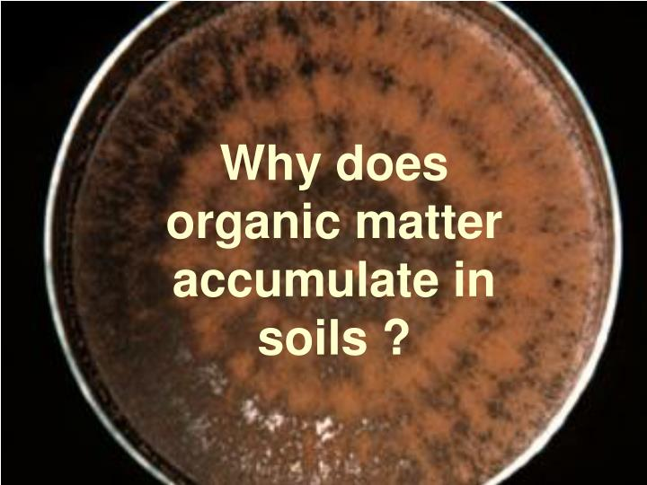 Why does organic matter accumulate in soils ?