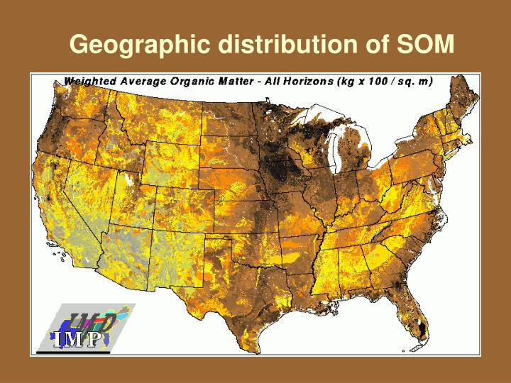 Geographic distribution of SOM