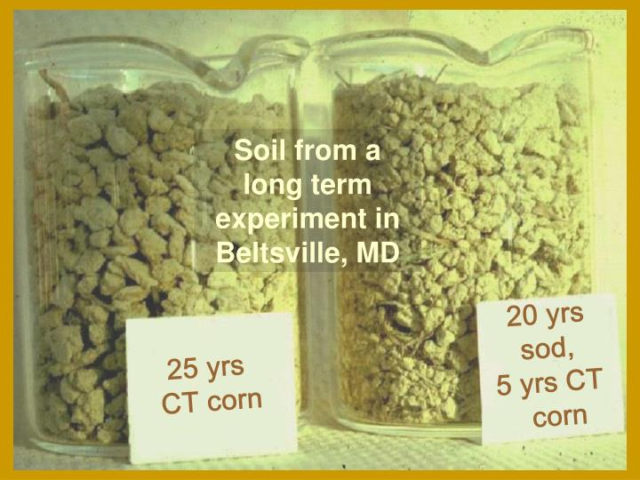 Soil from a long term experiment in Beltsville, MD