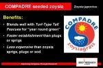 compadre seeded zoysia12