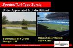 seeded turf type zoysia