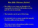 box jelly chironex fleckeri
