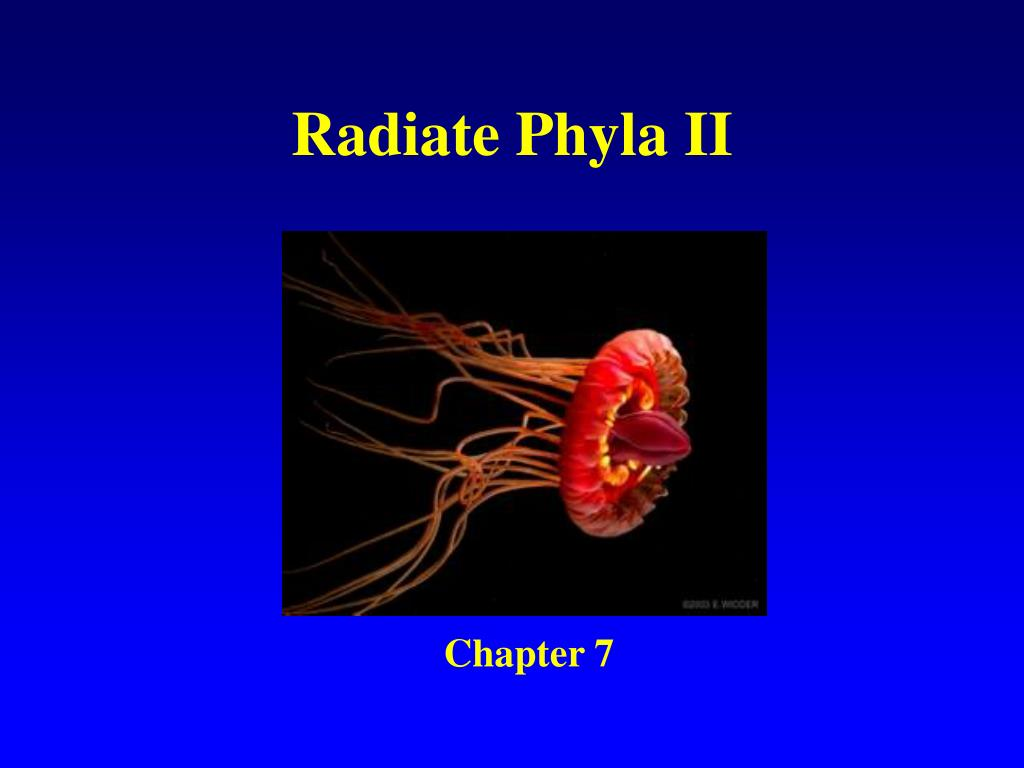radiate phyla ii l.