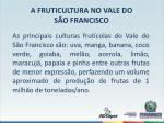 a fruticultura no vale do s o francisco4
