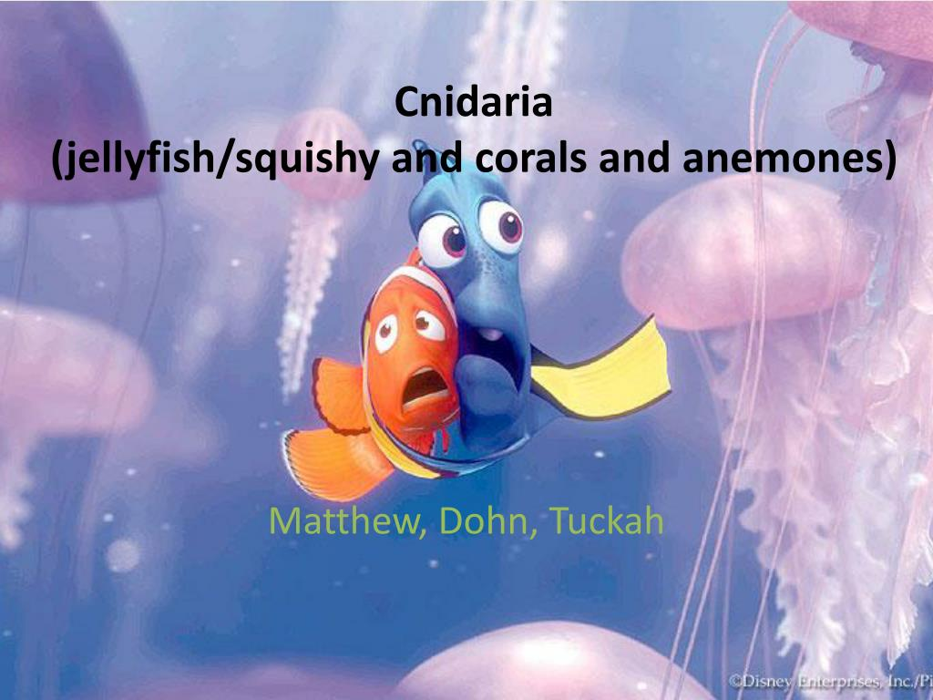 cnidaria jellyfish squishy and corals and anemones l.