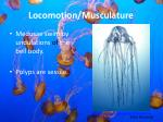 locomotion musculature