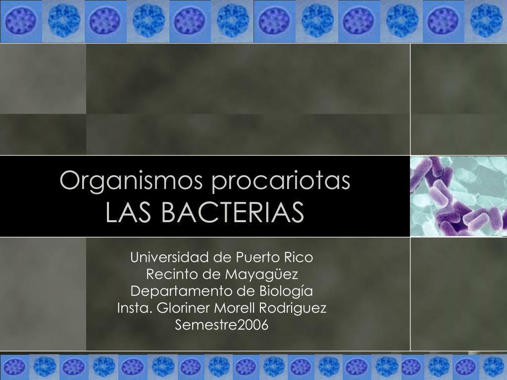 organismos procariotas las bacterias l.