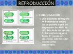 reproducci n25