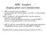 mhc komplex skupina g nov na 6 chromoz me