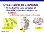living creatures are organized