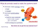 what do animals need to make the systems work