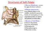 structures of soft palate