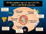ppara regulates apo a i apo a ii lpl abca 1 and sr bi expression