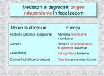mediator i ai degrad rii o x i gen i ndependent e n fagolizozom