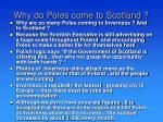 why do poles come to scotland