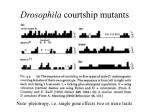 drosophila courtship mutants