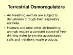 terrestrial osmoregulators