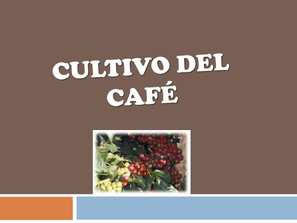cultivo del caf l.