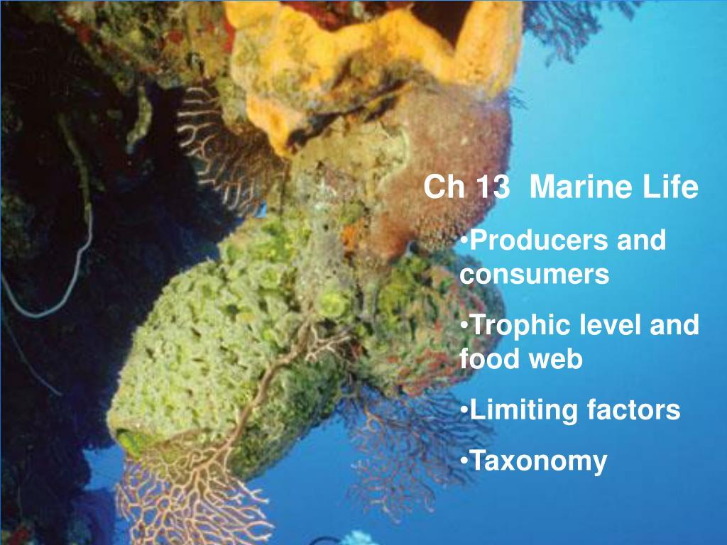 Ch 13  Marine Life