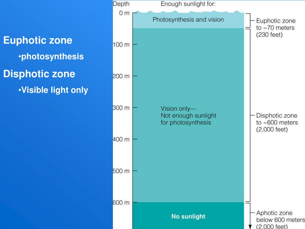 Euphotic zone