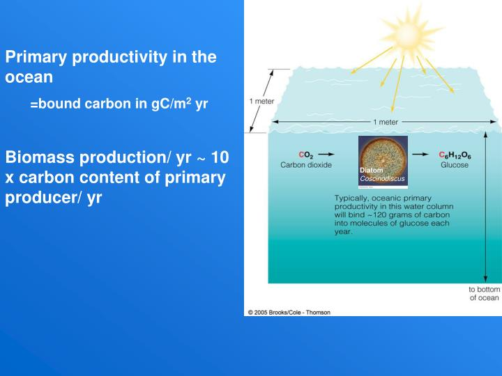 Primary productivity in the ocean