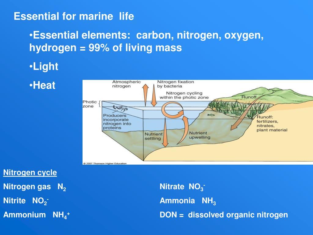 Essential for marine  life